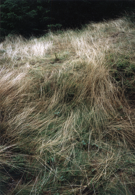 , 'Forest #10, Untitled (Grass Drawings),' 2004, Yancey Richardson Gallery