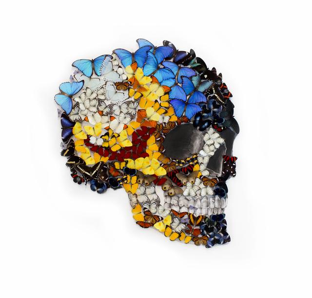 , 'Skull (4),' 2017, Eden Fine Art