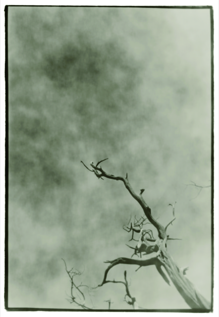 , 'Withered Branch No.1,' 2011, see+ Gallery