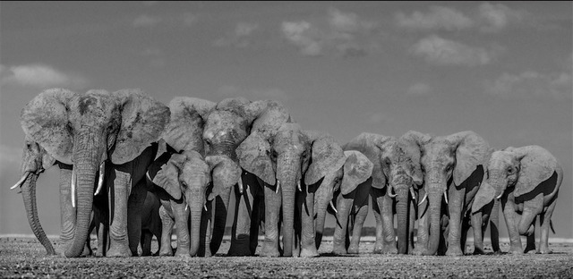 David Yarrow, 'Defense', 2019, Isabella Garrucho Fine Art