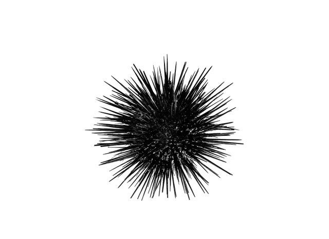 """, '""""Urchin"""",' 2018, Julie Zener Gallery"""