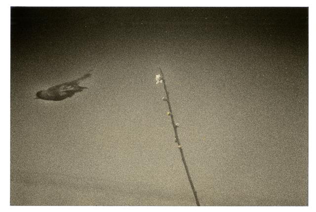 Yamamoto Masao, '1610, from Kawa=Flow', 2010, Etherton Gallery