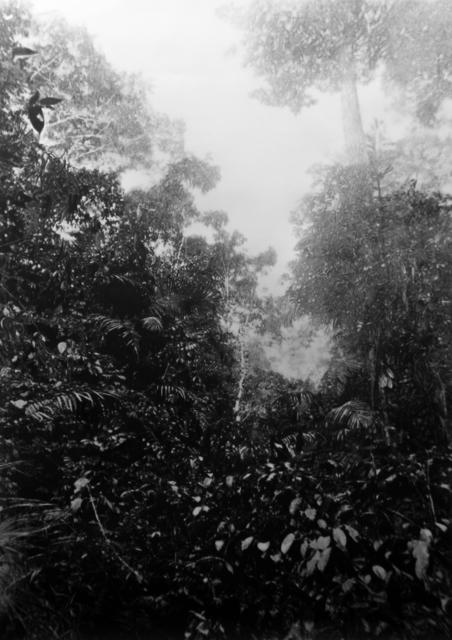 , 'Jungle#3, La forêt près de Zaranou,' , GALLERY FIFTY ONE