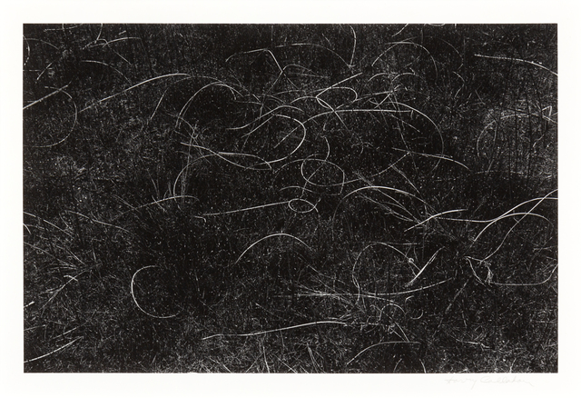 Harry Callahan, 'Grasses, Wisconsin', 1959, Hindman