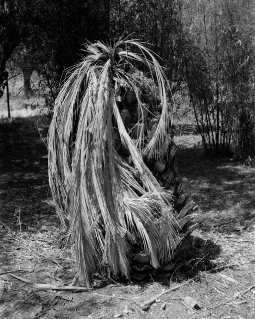 Nuno Barroso, 'Palm Tree', 2018, Procur.arte