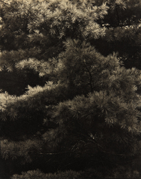Paul Strand, 'Connecticut Pines, Twin Lakes, CT,' ca. 1921, Phillips: The Odyssey of Collecting