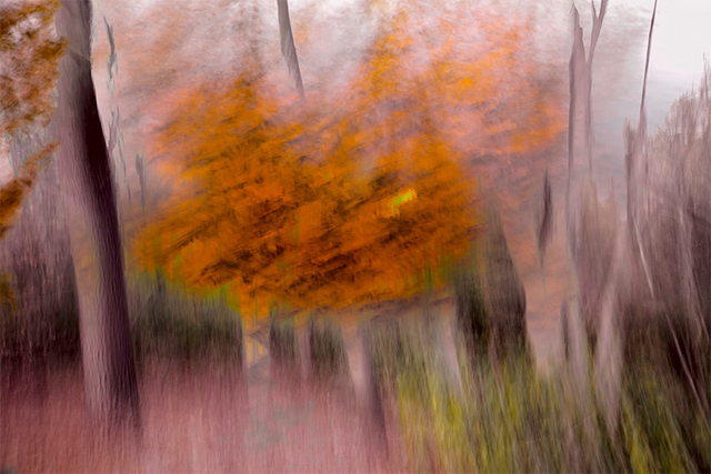 , 'Orange Tree,' 2018, 555 Gallery
