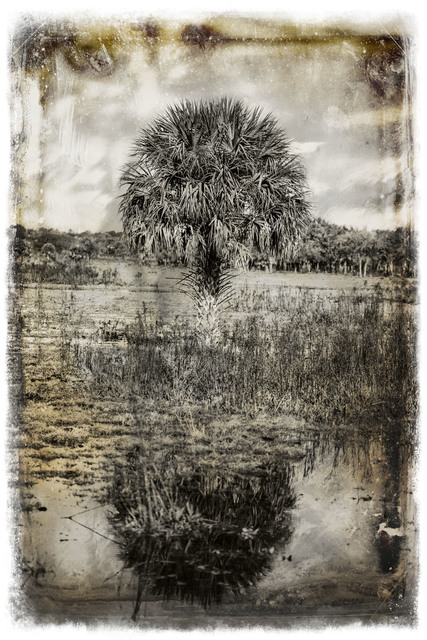 , 'Tree,' 2014, Nomad Two Worlds Gallery