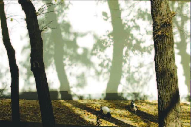 Abbas Kiarostami, 'Trees & Crows 54', 2007, Meem Gallery