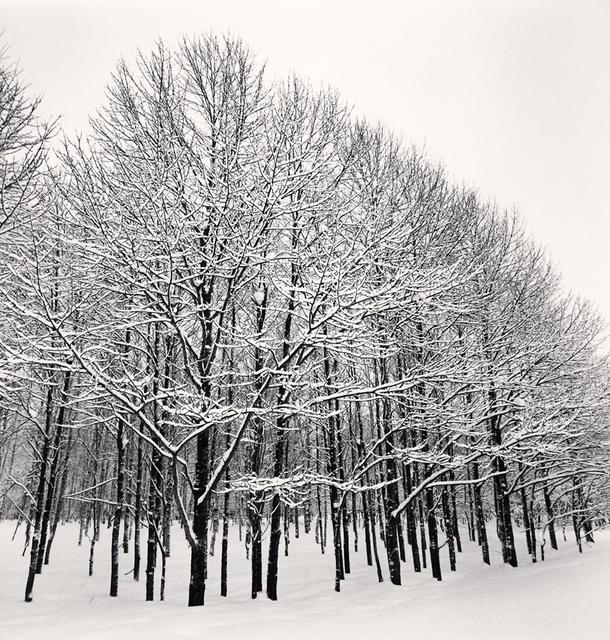 , 'Forest Snow, Sakkuru-Otoineppu, Hokkaido, Japan,' 2014, Robert Mann Gallery