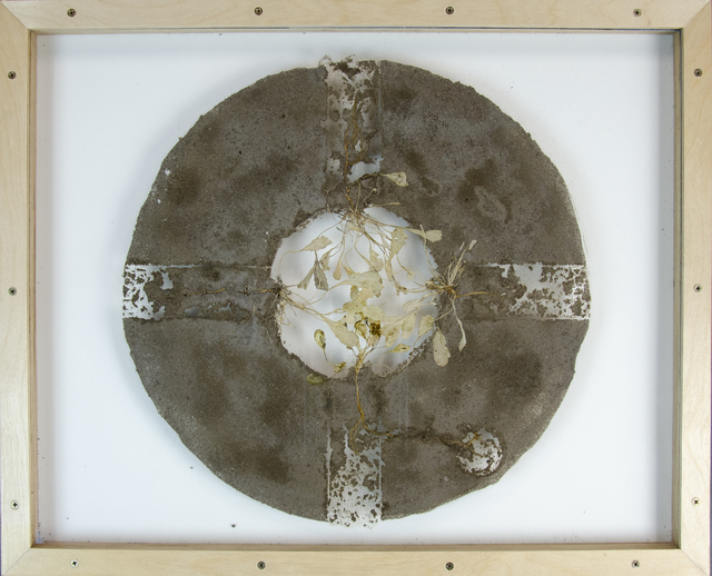 Mel Chin, 'Revival Field plant and field Study (aka Carulescens Cross)', 2015, Drawing, Collage or other Work on Paper, Hyperaccumultor Thlaspi carulescens and inorganic material (soil from Pig's Eye Landfill, St. Paul, MN contaminated with Cd cadmium ash) collected from Revival Field site sealed/mounted on glass., Park Place Gallery