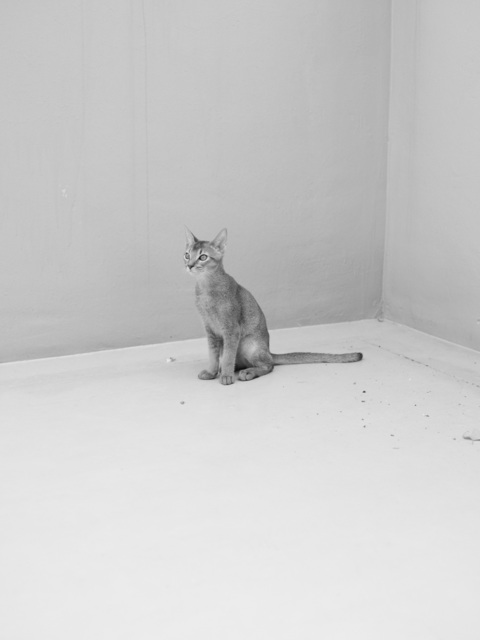 , 'Cat 1 from the series Disappearance,' 2016, PKM Gallery