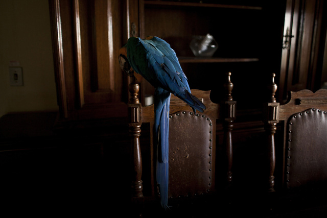 , 'Arara (from the series Zoo) - [Parrot],' 2014, Zipper Galeria