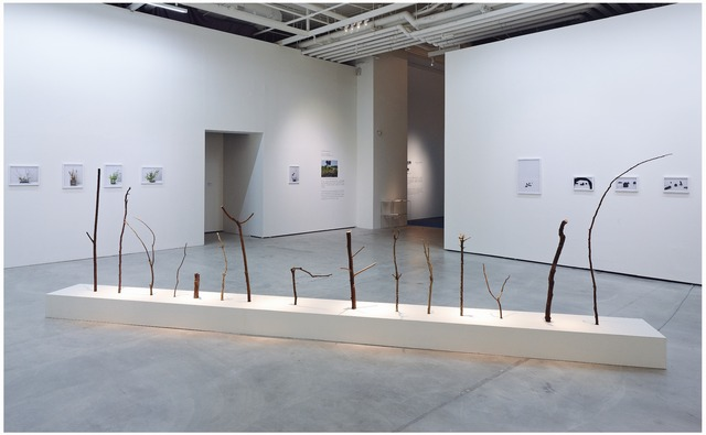 Yahui Wang, 'A work for a building plot II: I am a branch', 2012, TKG+