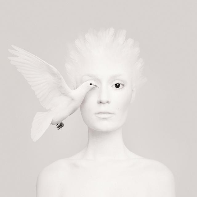 , 'Dove,' 2016, Anna Laudel