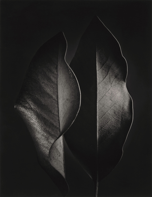 , 'Two Leaves,' 1952, Photography West Gallery
