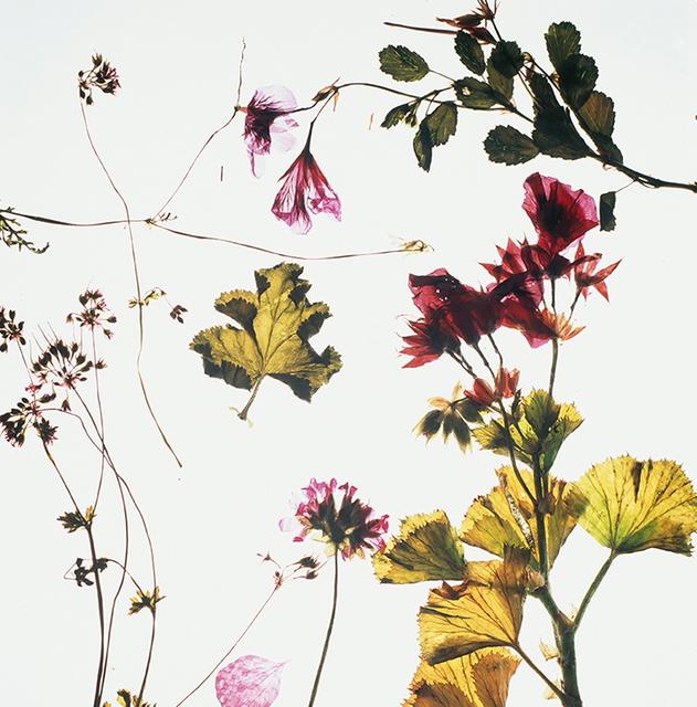 , 'Green with Ivy II,' 2018, Barnard