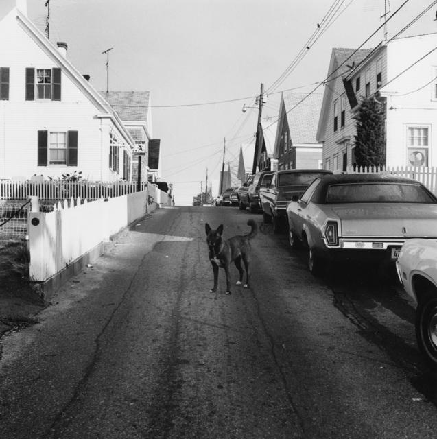 , 'Dog in the Street, Provincetown,' 1976, Fraenkel Gallery
