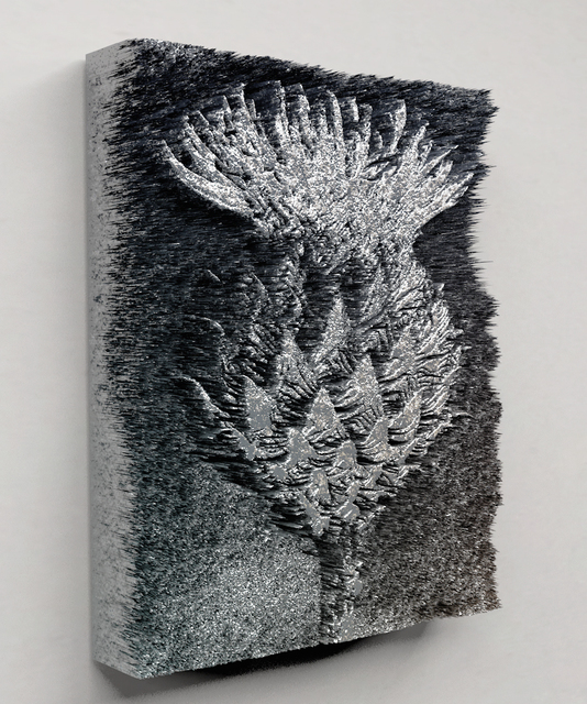 , 'Centaurea kotschyana,' 2015, Future Gallery