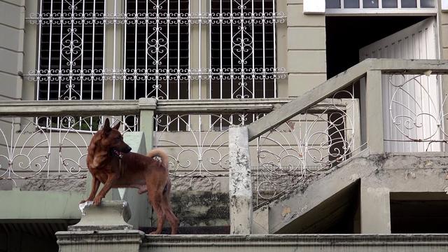 , 'El baile del perro gozque,' 2015, (bis) oficina de proyectos