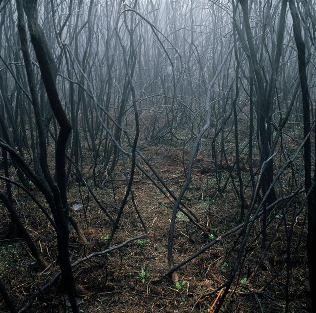 , 'A la aurora,' 2005, Carlos Carvalho- Arte Contemporanea