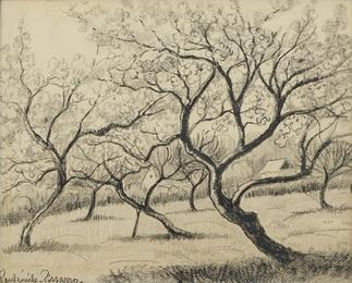 Arbres dans un Champ (Trees in a field)