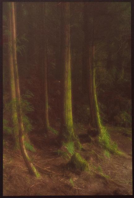 , 'Five Trees,' , Soho Photo Gallery