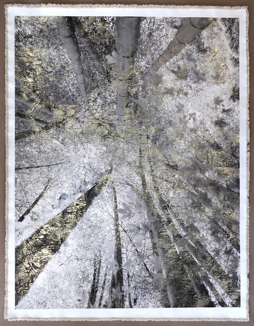 Bill Claps, 'Bamboo Canopy Miniamiaguni', 2018, Laurent Marthaler Contemporary