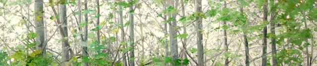 , 'Springtime Treetops,' 2018, L'Attitude Gallery