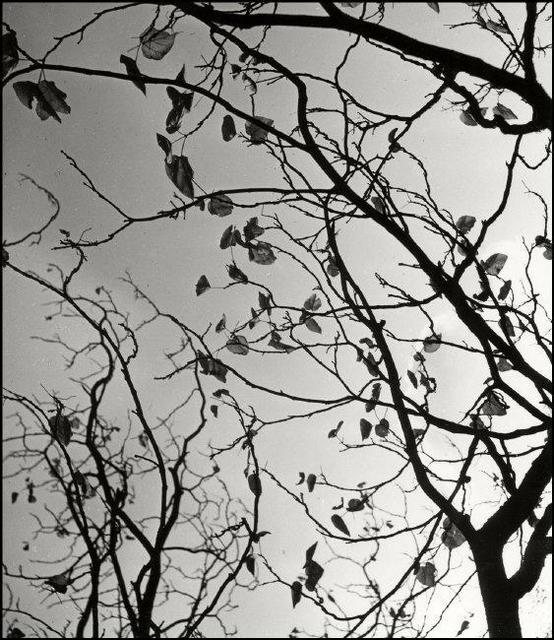 , 'Leaves in the Sky Near. Hamburg, Germany. ,' 1933, Magnum Photos