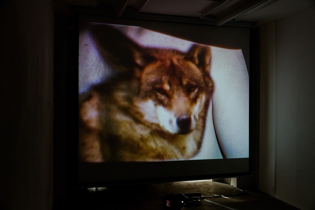"Doris Schmid, ""BLINK"", 2-channel video installation, 2013 