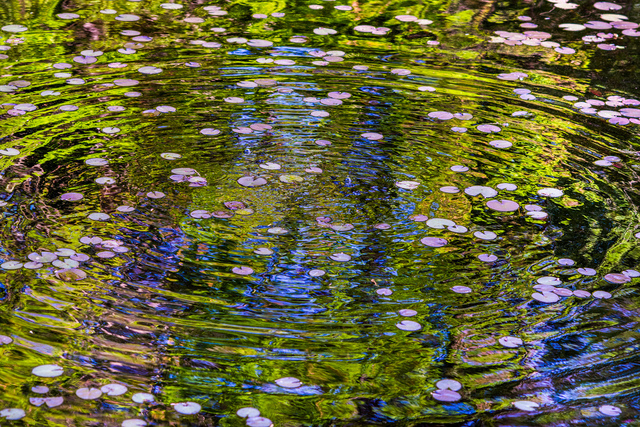 , 'Lillies & Ripples,' , THE WHITE ROOM GALLERY