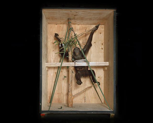 , 'Smithsonian Monkey,' 2005, Bau-Xi Gallery