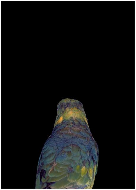 , 'Bad Bird #27,' , .M Contemporary