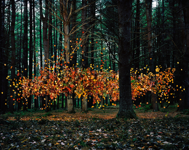 , 'Leaves no. 1, Napanoch, New York,' 2011, Jackson Fine Art