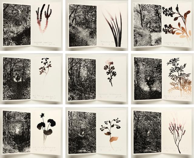 , 'Drawing the distance (cuarto intento),' 2016, Galería La Caja Negra