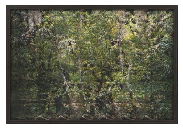 Andreas Greiner, 'Jungle_Memory_0001', 2019, DITTRICH & SCHLECHTRIEM