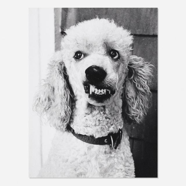 Greg Nickson, 'Untitled (Wishbone poodle)', c. 1990, Wright