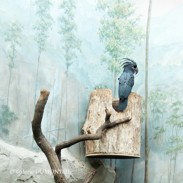 , 'Cockatoo and Painted Decor,' , Galerie Dumonteil