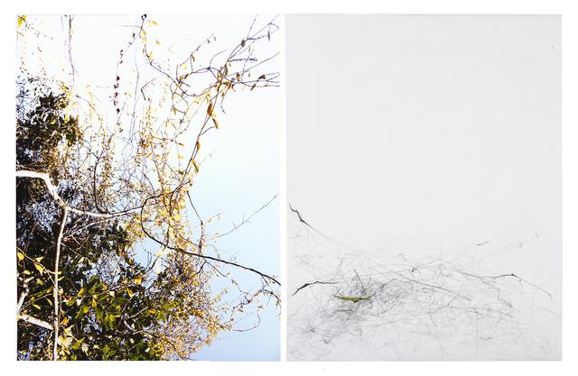 , 'Untitled (LF16 #104),' 2016, Yancey Richardson Gallery