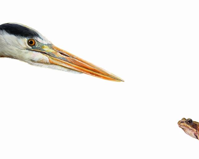 , 'Top Predator Heron and Frog,' 2017, The Biscuit Factory