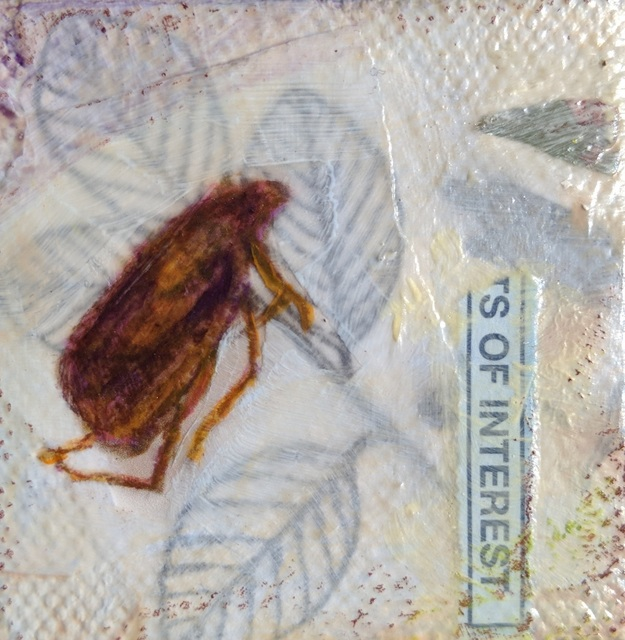 , 'Brown Beetle #2,' , Sparrow Gallery