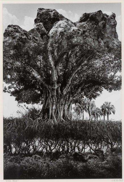 Jerry Uelsmann, 'Rock Tree', 1969, Doyle