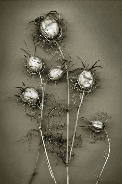 , 'Christine's Thistles,' , Fabrik Projects Gallery
