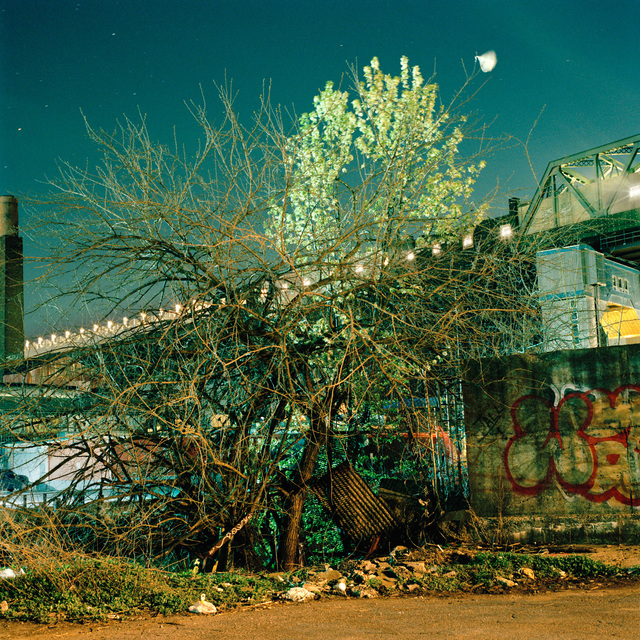 , 'Spring Tangle,' 2013, Ground Floor Gallery