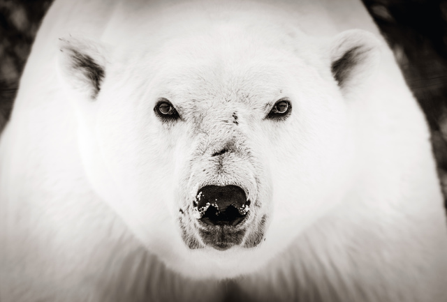 , 'Ice Bear,' 2019, Woolff Gallery