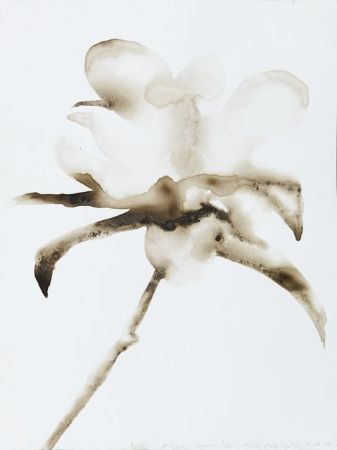 , 'Magnolia Magnolia grandiflora (Turtle Pond, Central Park, Manhattan),' 2016, Salon 94
