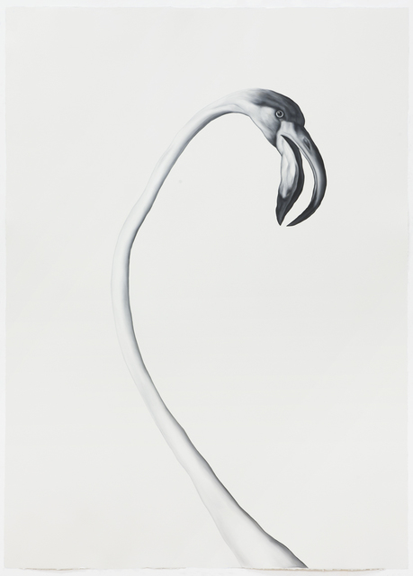 Shelley Reed, 'Flamingo (After Desportes)', 2020, Drawing, Collage or other Work on Paper, Oil on Arches oil paper, Sears-Peyton Gallery
