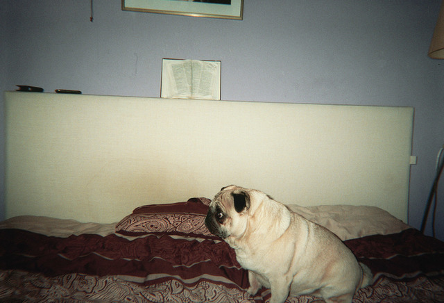 , 'I could only photograph this dog because the owner wanted to have sex with me,' 2012, Galerie Ron Mandos