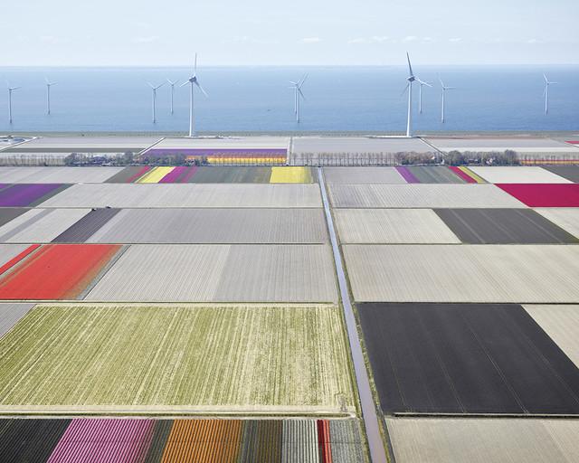 David Burdeny, 'Tulips and Turbines 02, Noordoostpolder, Netherlands', 2016, Bau-Xi Gallery